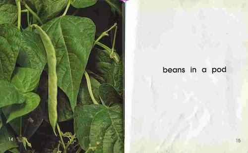 sample page #2 from BEANS!  (Plants: Life Cycles)  by Gail Saunders-Smith