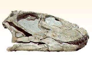 Shunosaurus  slull