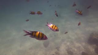 Snorkeling diving Koh Lanta yai