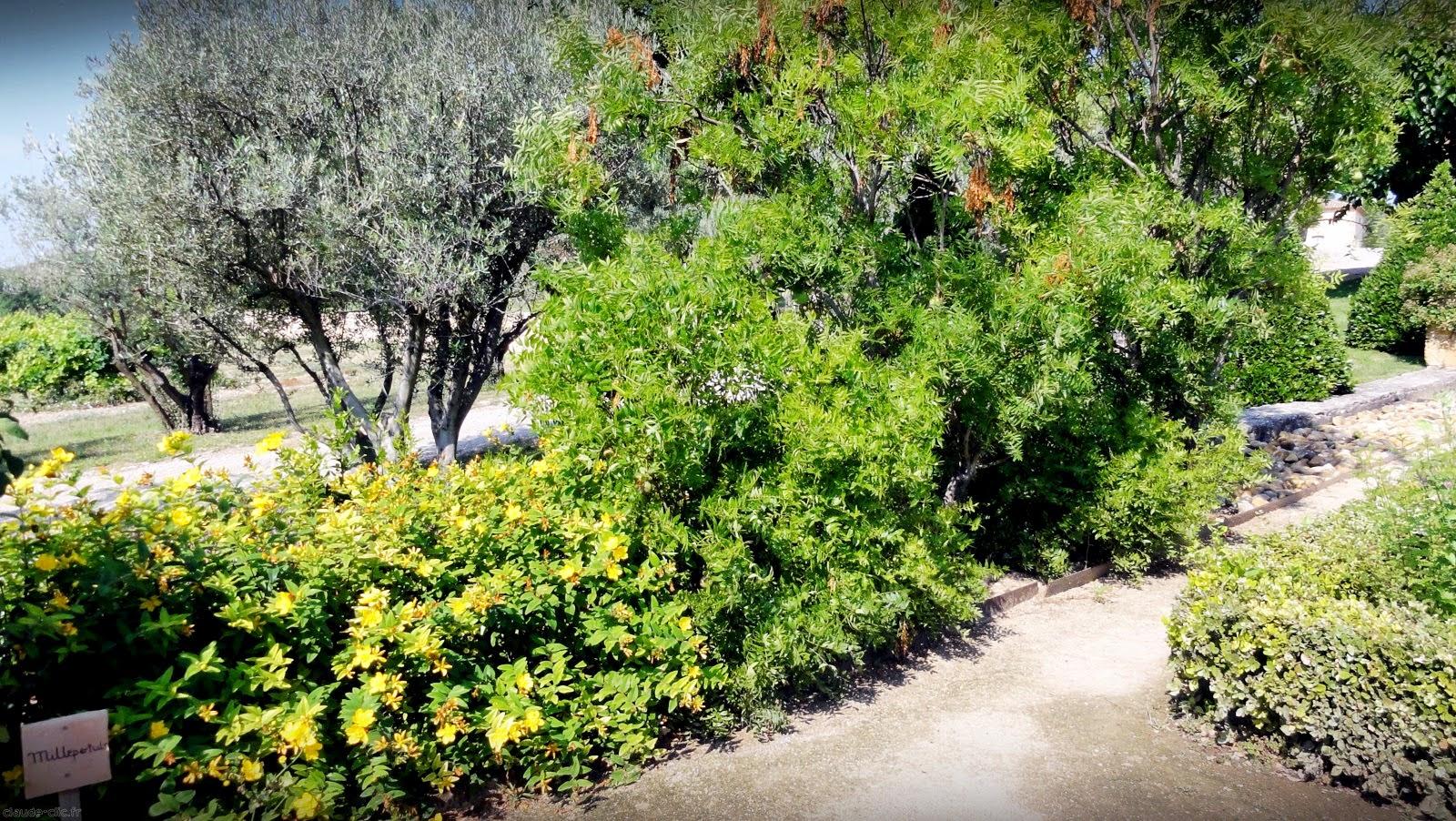 N 5 jardin de val joanis a pertuis for Entretien jardin pertuis