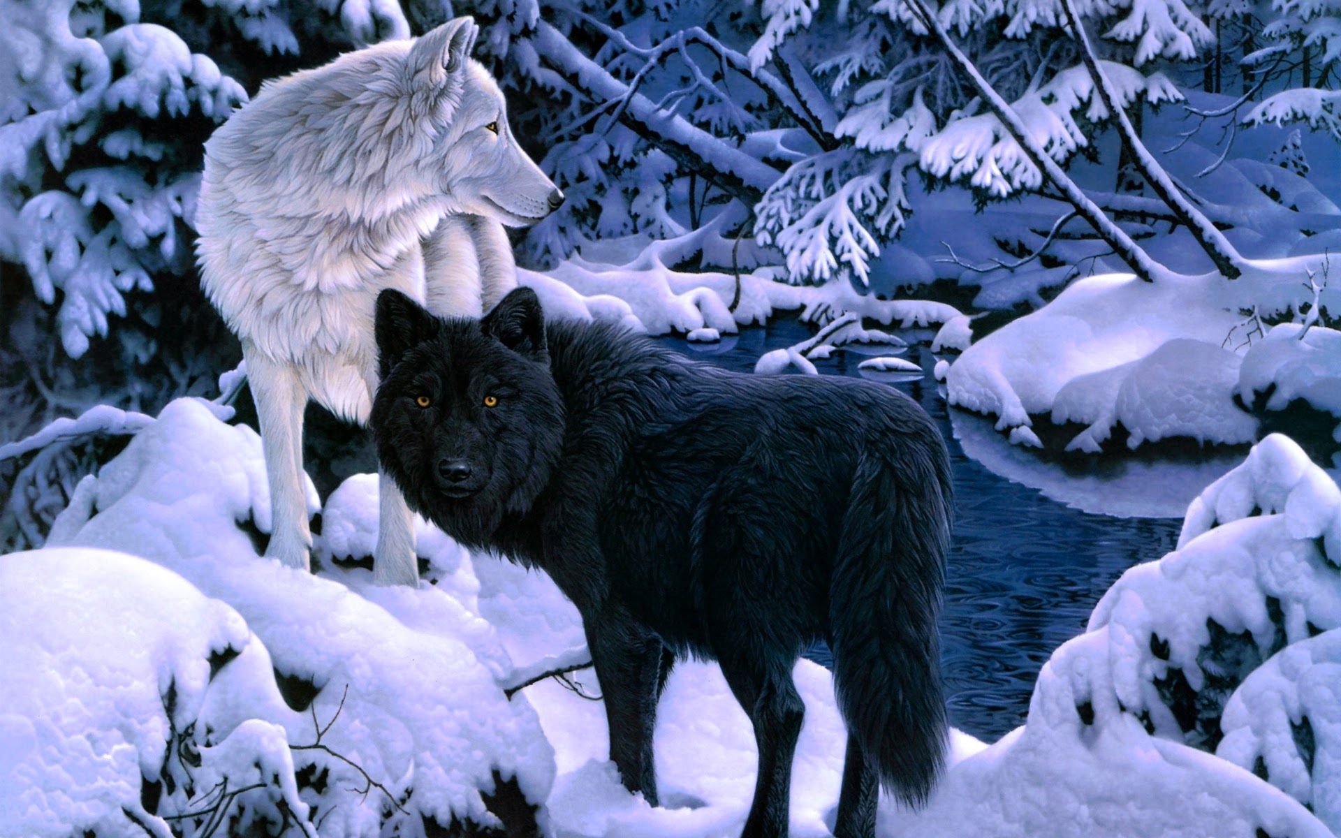 Home   187  animals   wild   187  Others   187  Wolf WallpaperWhite Wolf And Black Wolf Fighting