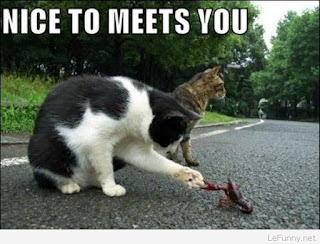 Funny cat sayings nice to meets you