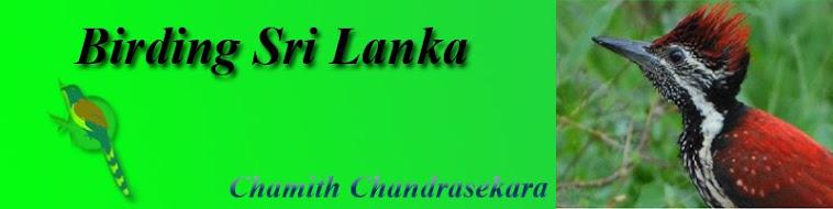 Birding Sri Lanka Banner