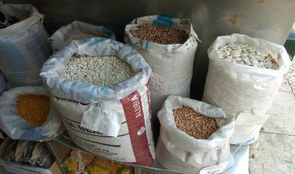 Moçambique: Camponeses cultivam feijão para combater fome e sair da pobreza