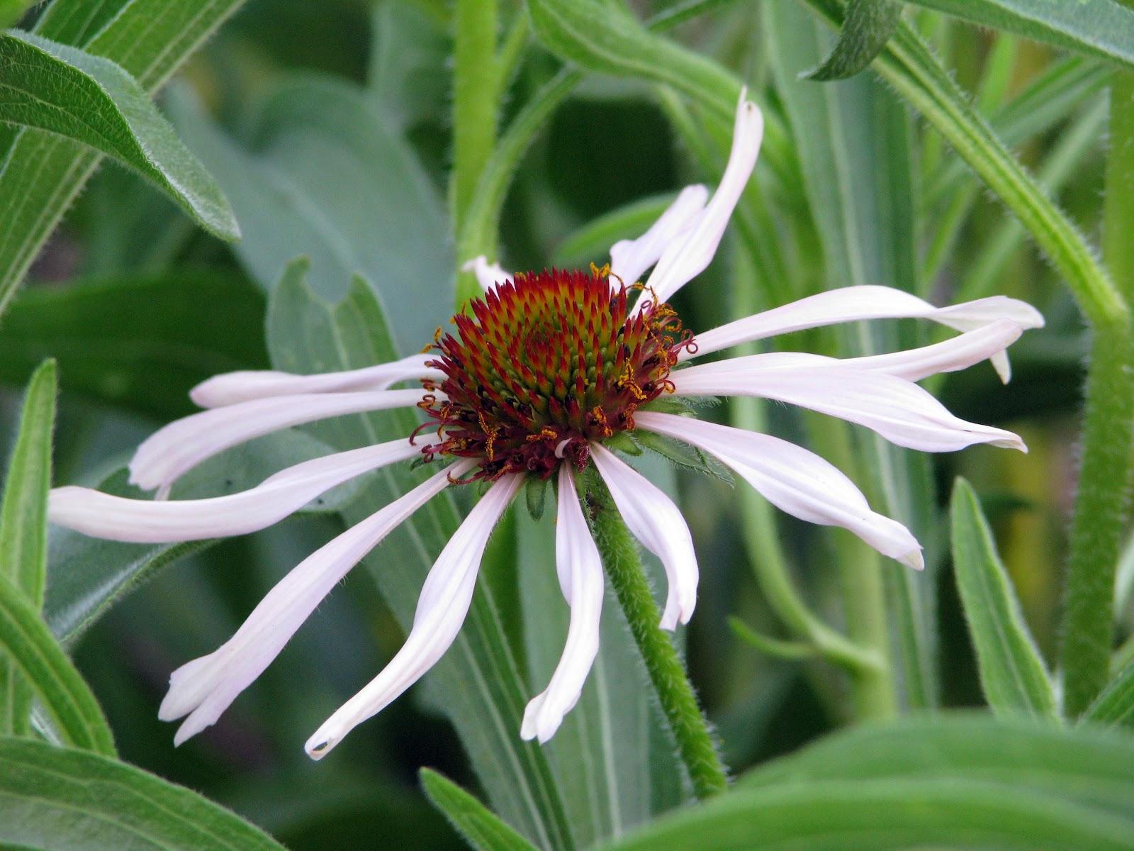 native plants houston texas