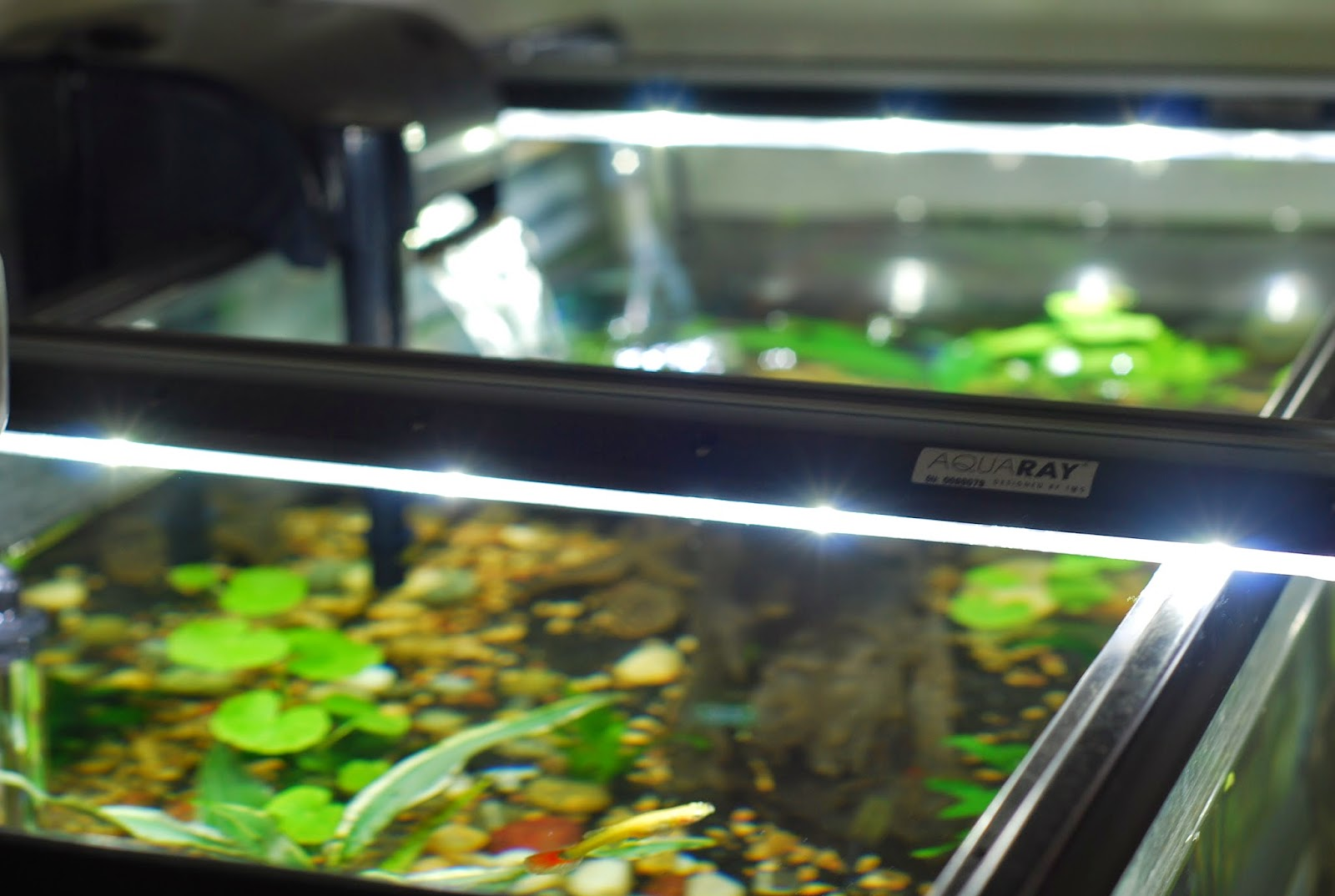 Aquarium lighting for plants - Lighting For A Freshwater Tank Is Pretty Straight Forward But There Are Some Aquarium Keepers That Get Confused As To Which Light Is The Best For Plant