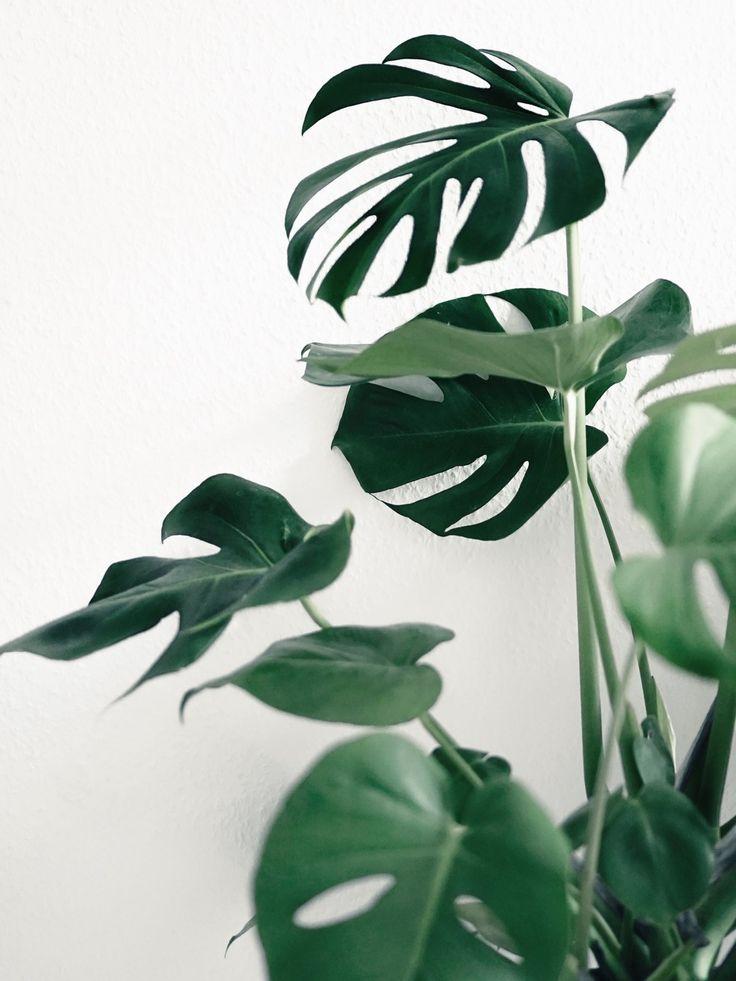 La fabrique d co des plantes dans la salle de bain for Plante salle de bain