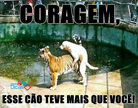 Cão e Tigre