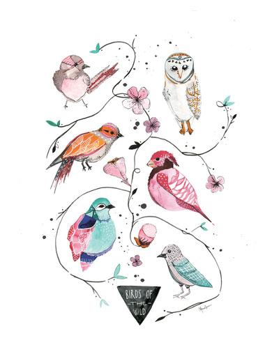 värikkäät linnut colourful birds lintujuliste