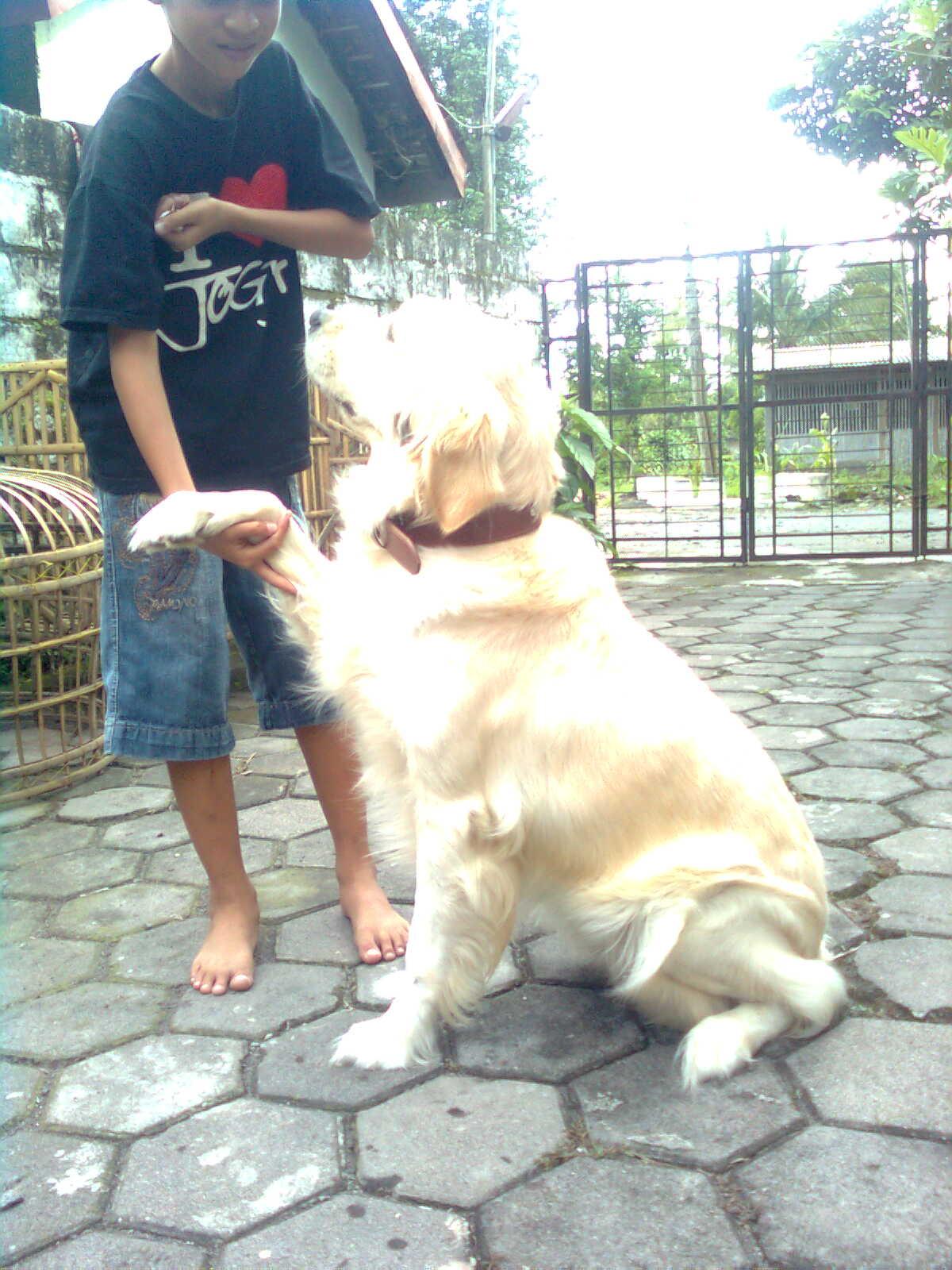 cara melatih anjing