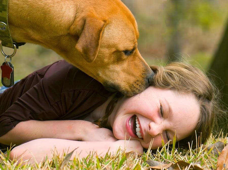 Cómo saber si mi perro me quiere: cuidados y nombres para tu mascota. Perro lamiendo la cara