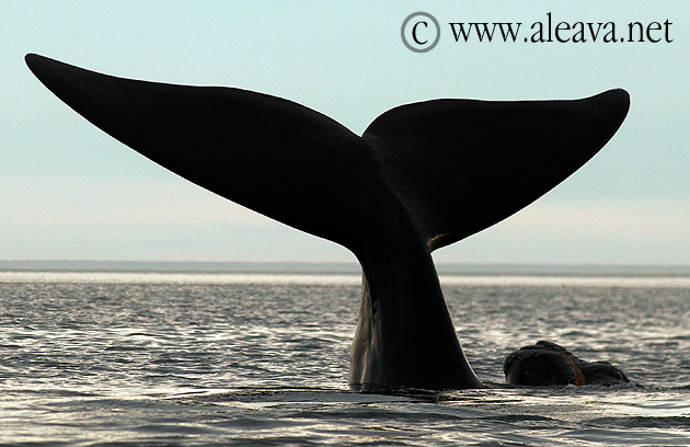Puerto Piramides - The only Whale Watching port in Argentina