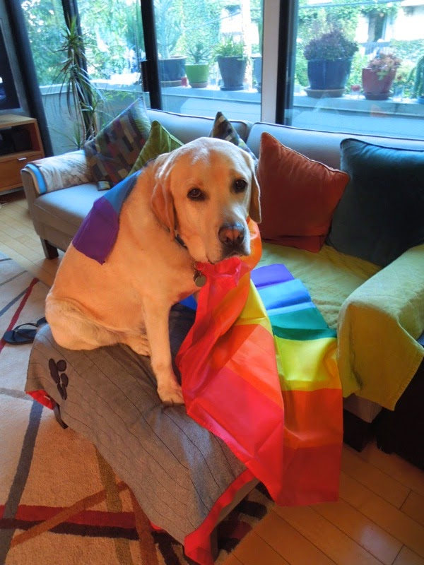 Pride Labrador Cooper