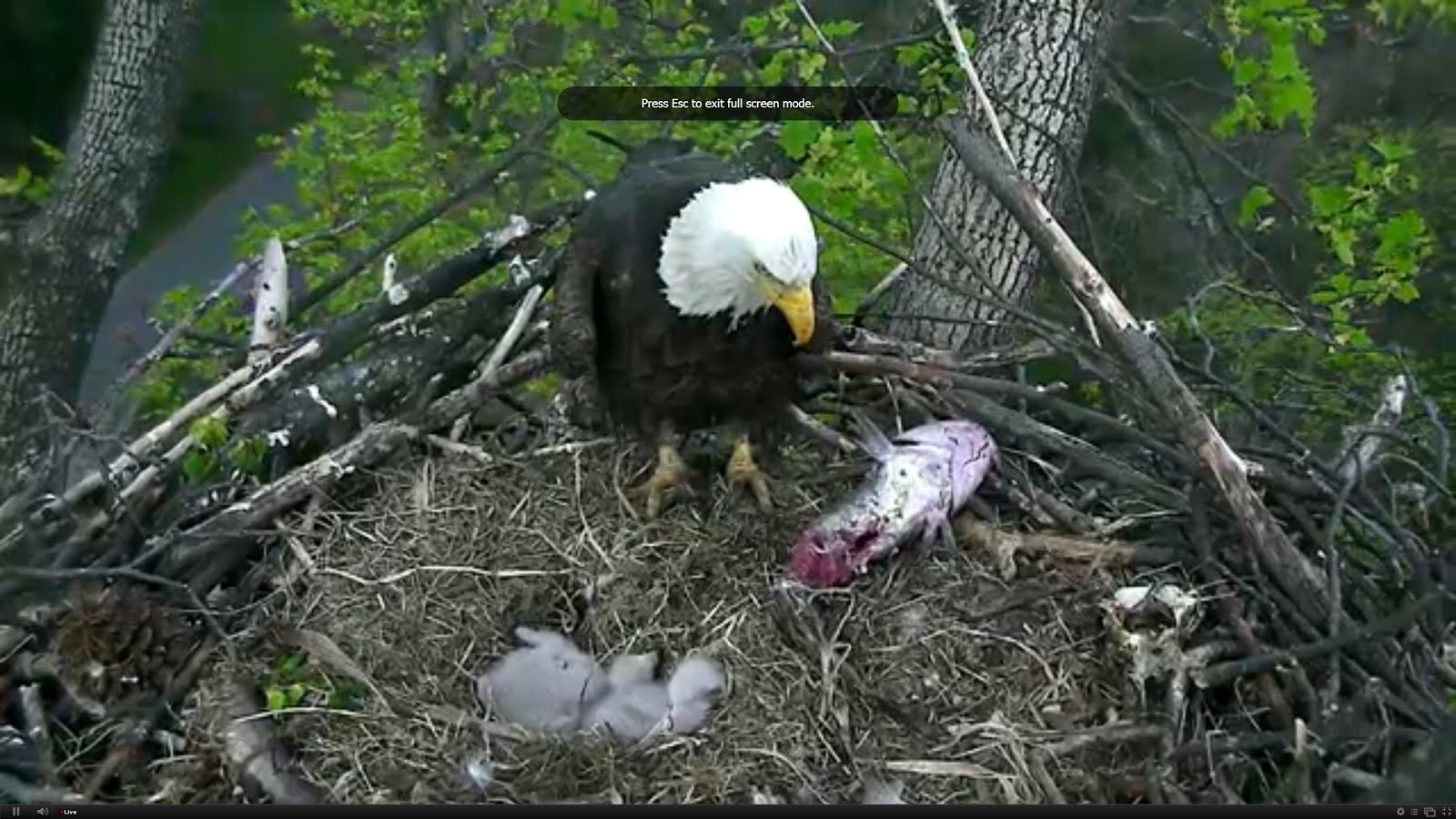 GOD\'s AWESOME ANIMALS 011215 : live cam update 3/25/16 photo: MAMA ...