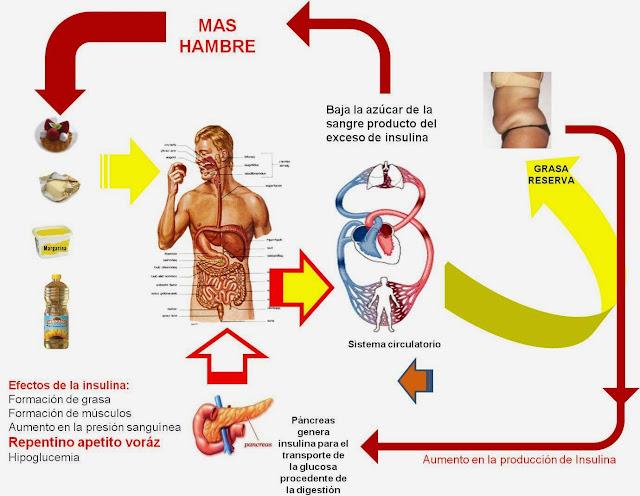 Diabetes Causas efectos y como controlarla: que es el