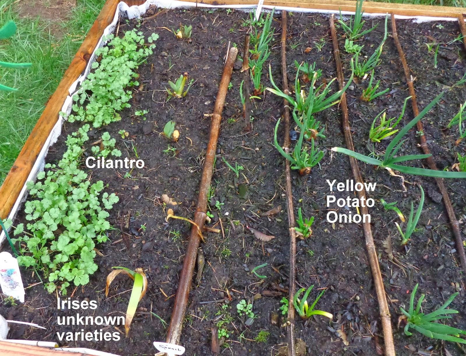 How To Rejuvenate Soil In Raised Bed Vegetable Garden
