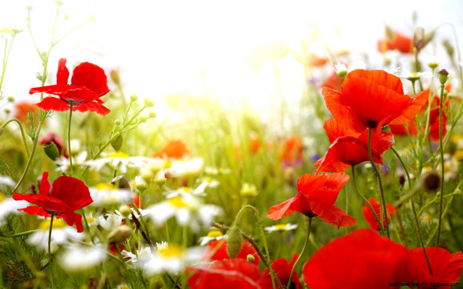 Springtime flowers desktop background best hd wallpapers view original size spring flowers backgrounds mightylinksfo