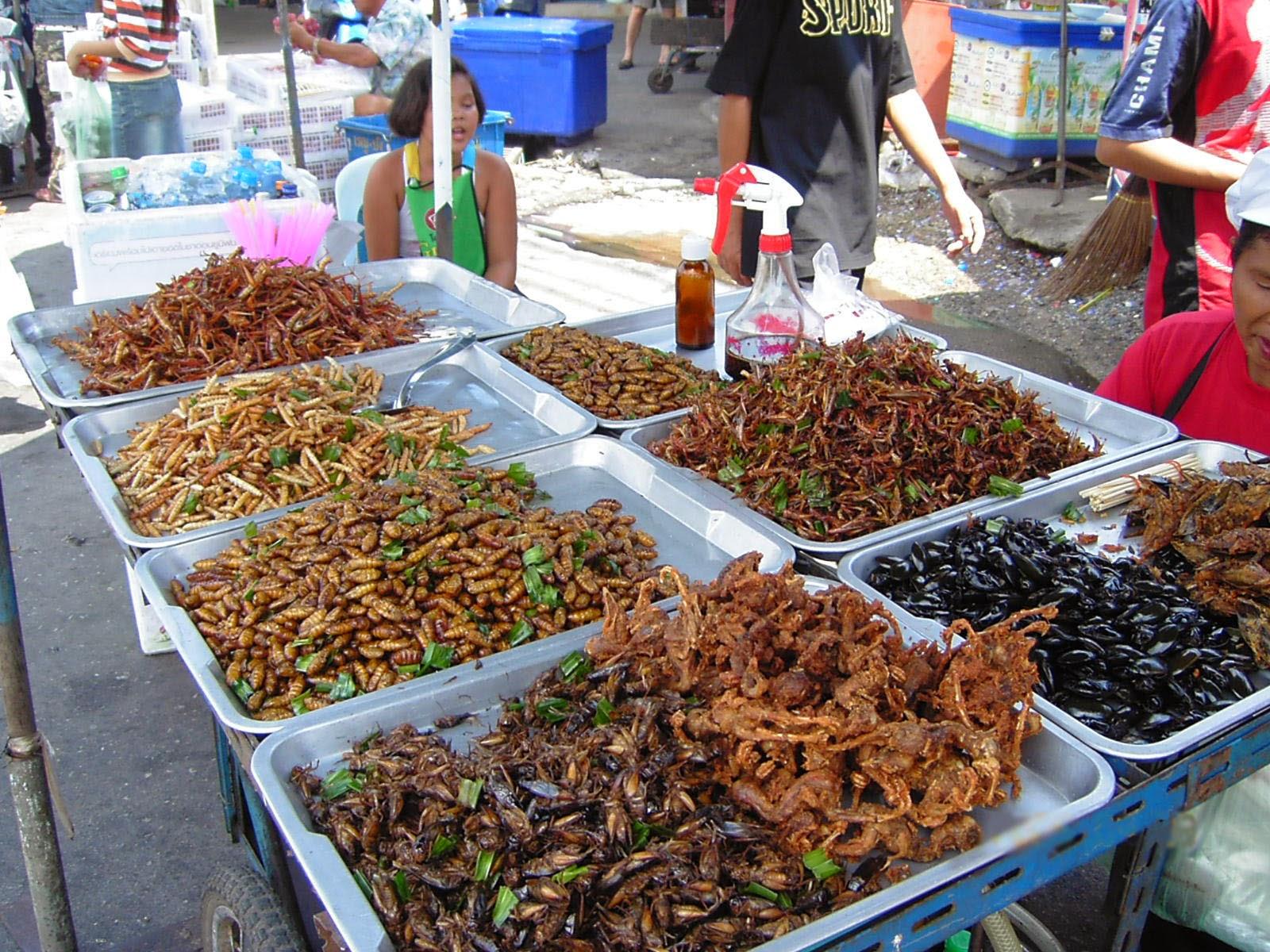 A rebours nouvelle mode culinaire les insectes font for Asticots cuisine