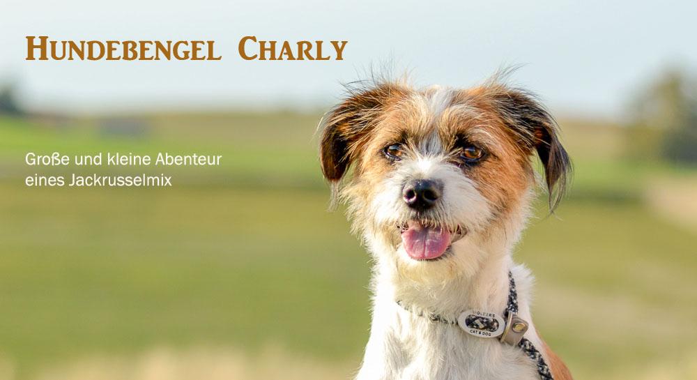 Hundebengel Charly Hundeblog