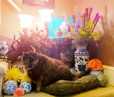 Cats and flowers - Stein Your Florist Co.