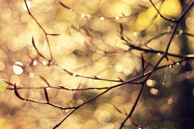 golden sunlight, gorgeous bokeh and raindrops on branches