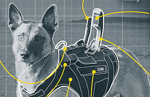 Cairo the SEAL Dog