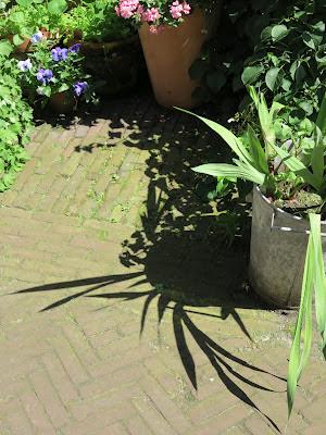 container garden, shadow, Haafner