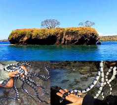 Dukung Pulau Ular di BIMA NTB Mewakili Seluruh Kota Bima
