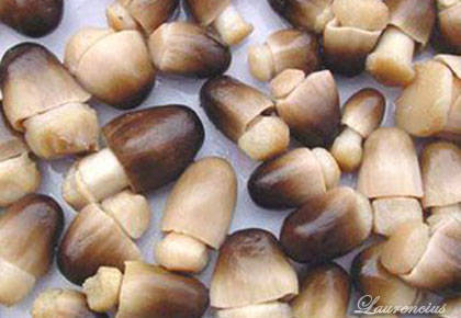 Foto-jamur-merang
