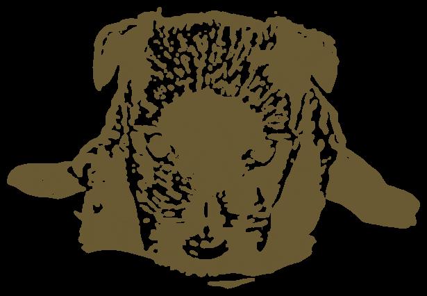 黒い子犬(動物)