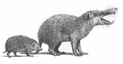 Erinaceidae extintos Deinogalerix