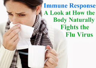 Immune Response - A Look at How the Body Naturally Fights the Flu Virus