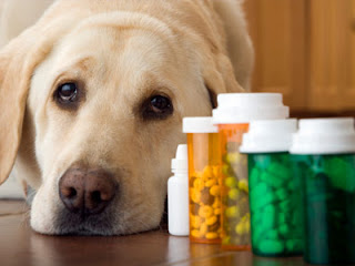 Proper Dog Nutrition Information
