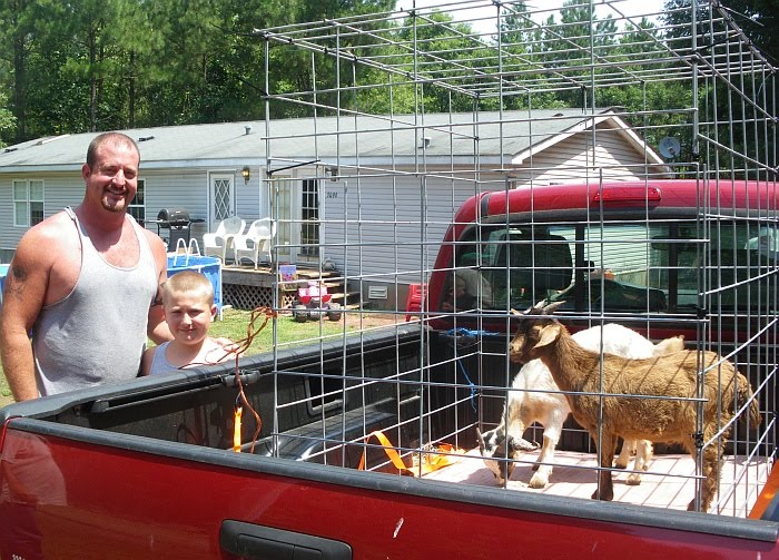 Id Made A Goat Cage Out Of Cattle Panels And Cable Ties Used Rachet Tie Down To Secure It In The Back My Truck Goats Settled Right For