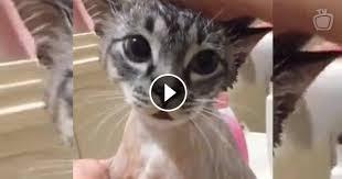Gato fala