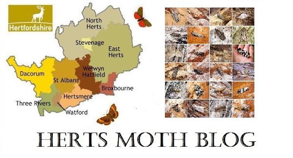 Herts Moth Blog