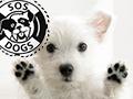 SOS DOGS - Oradea