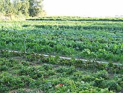 เกษตรอินทรีย์ จุดมุ่งหมายที่ผู้บริโภคและเกษตรกรควรทำความเข้าใจ