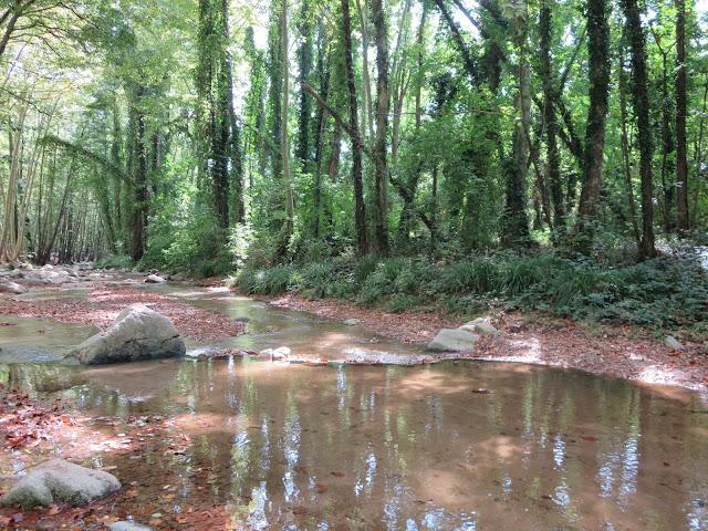 Noelia Mo otoño arbucies árboles hojas rio
