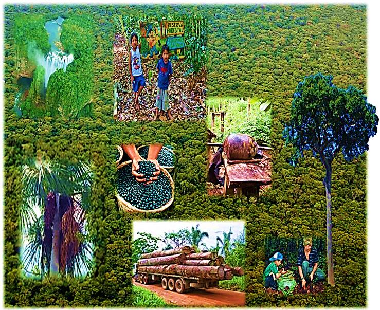 Di logos de derecho forestal comparado de la reladefa for Manejo de viveros forestales
