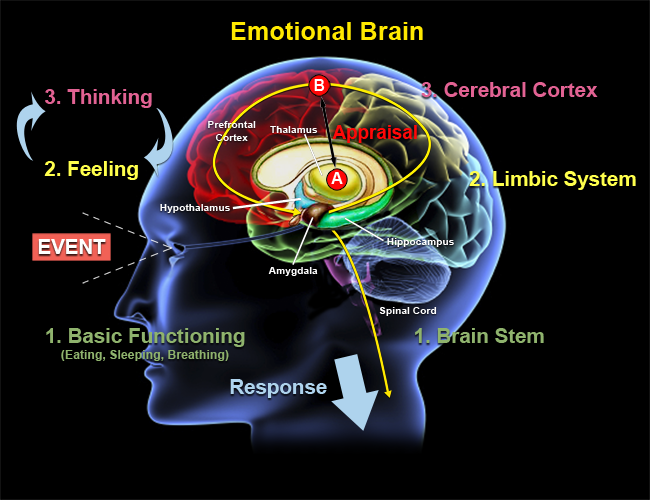 Brain Monitoring System : The three of me