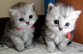 Gambar Anak Kucing yang Imut