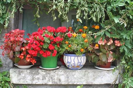 Decoracion actual de moda jard n en maceta - Macetas de jardin ...
