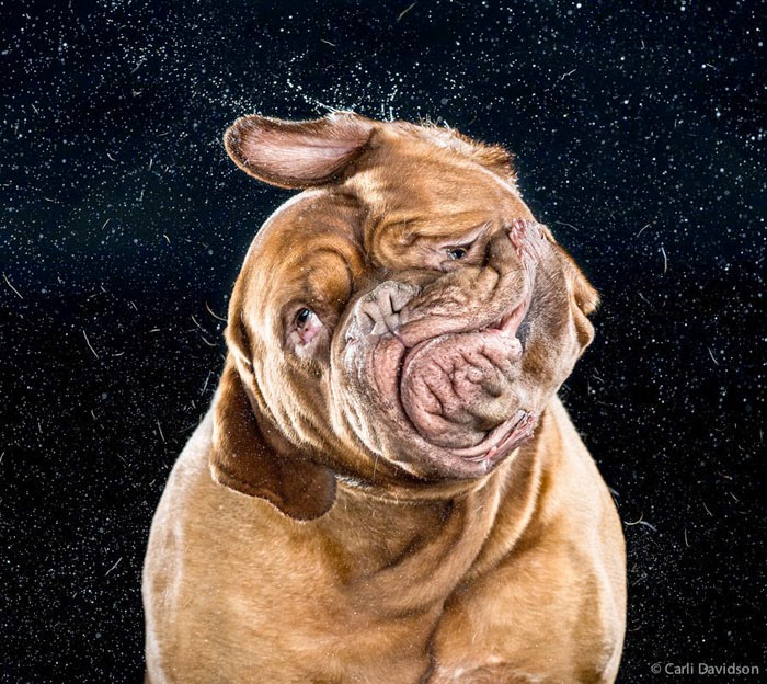 fotos de perros