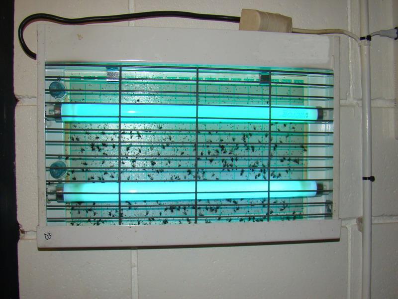 Plagas Urbanas Mendoza: Control de la mosca doméstica