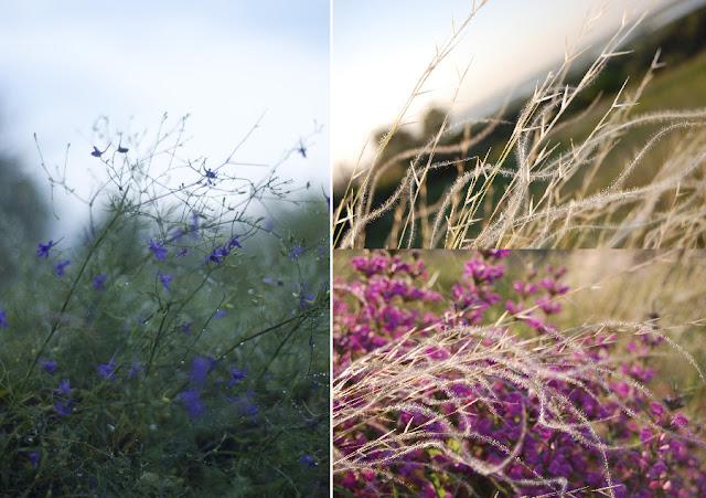 Цветы и ковыль донских степей