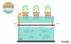 GROW TIP Aquaponics