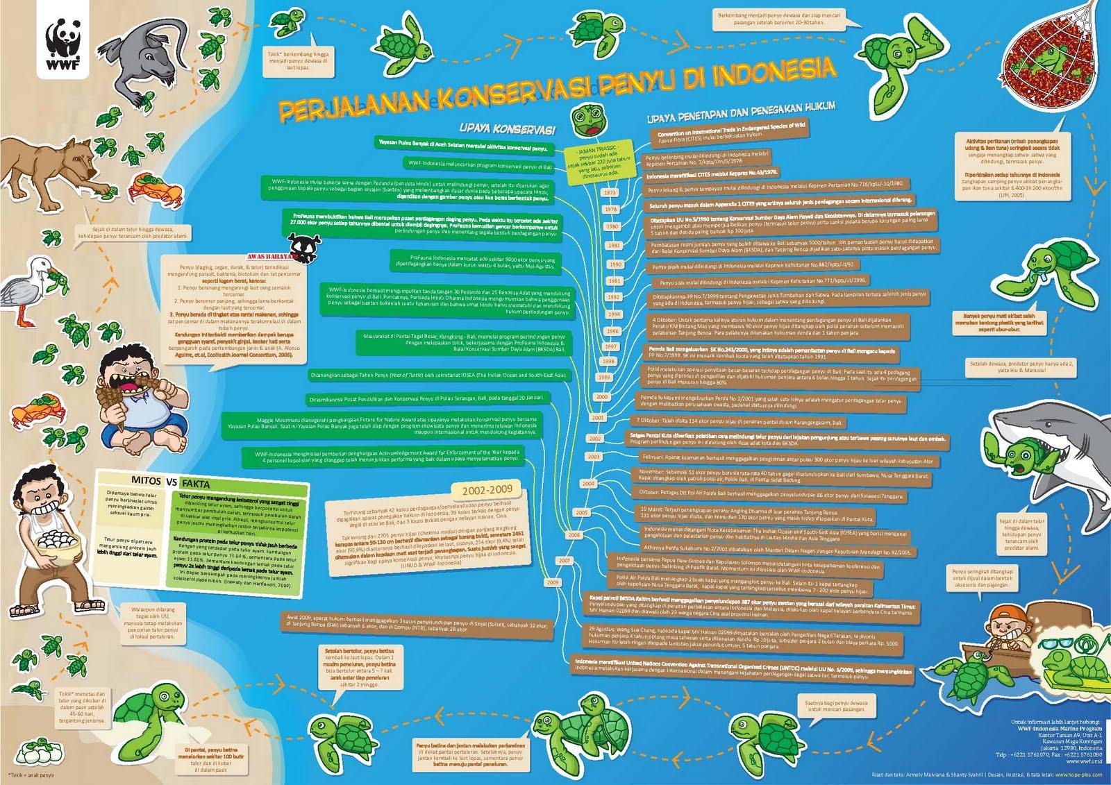 peta penyebaran penyu di indonesia