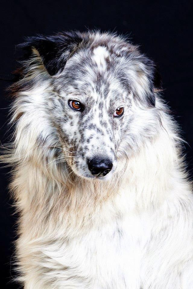 adozione cane taglia media grande