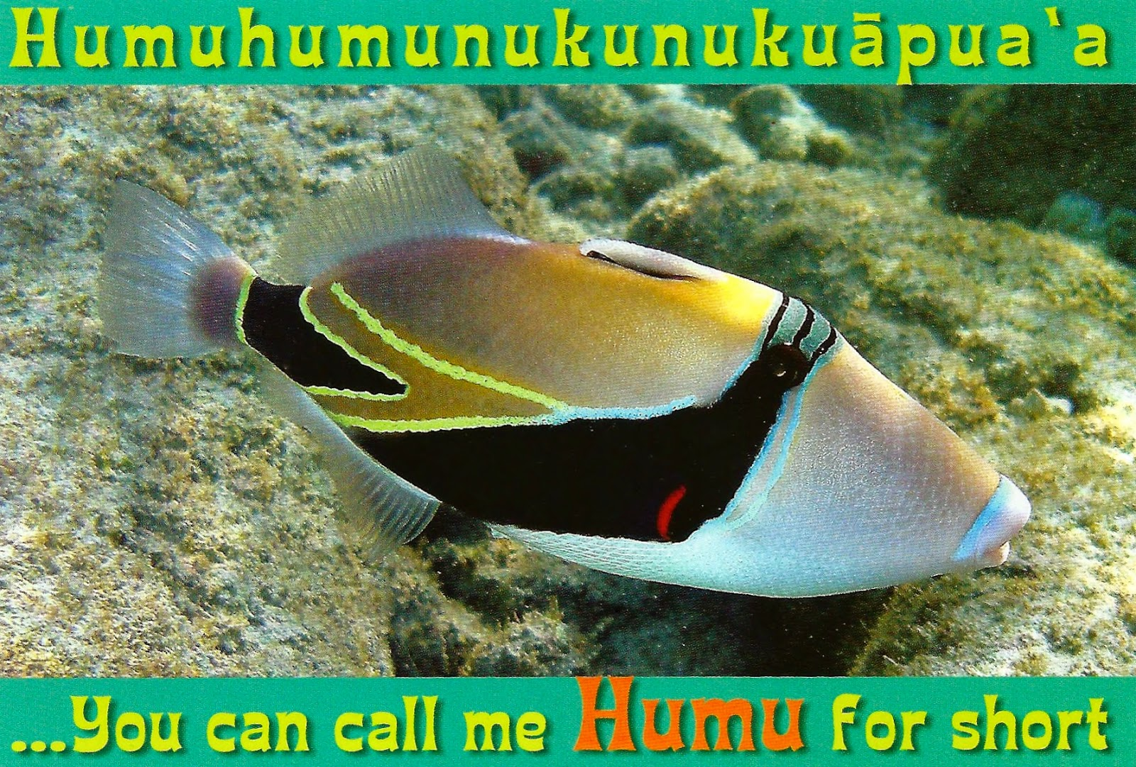 my favorite postcards humuhumunukunukuapua a reef triggerfish